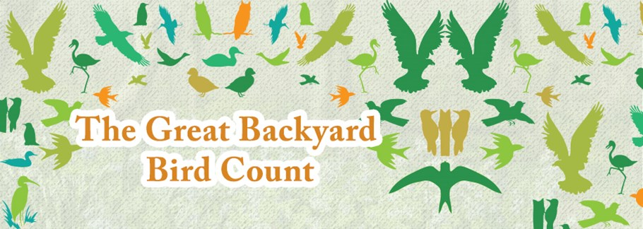 Join in the Great Backyard Bird Count