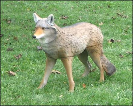 Coyote_decoy_picture