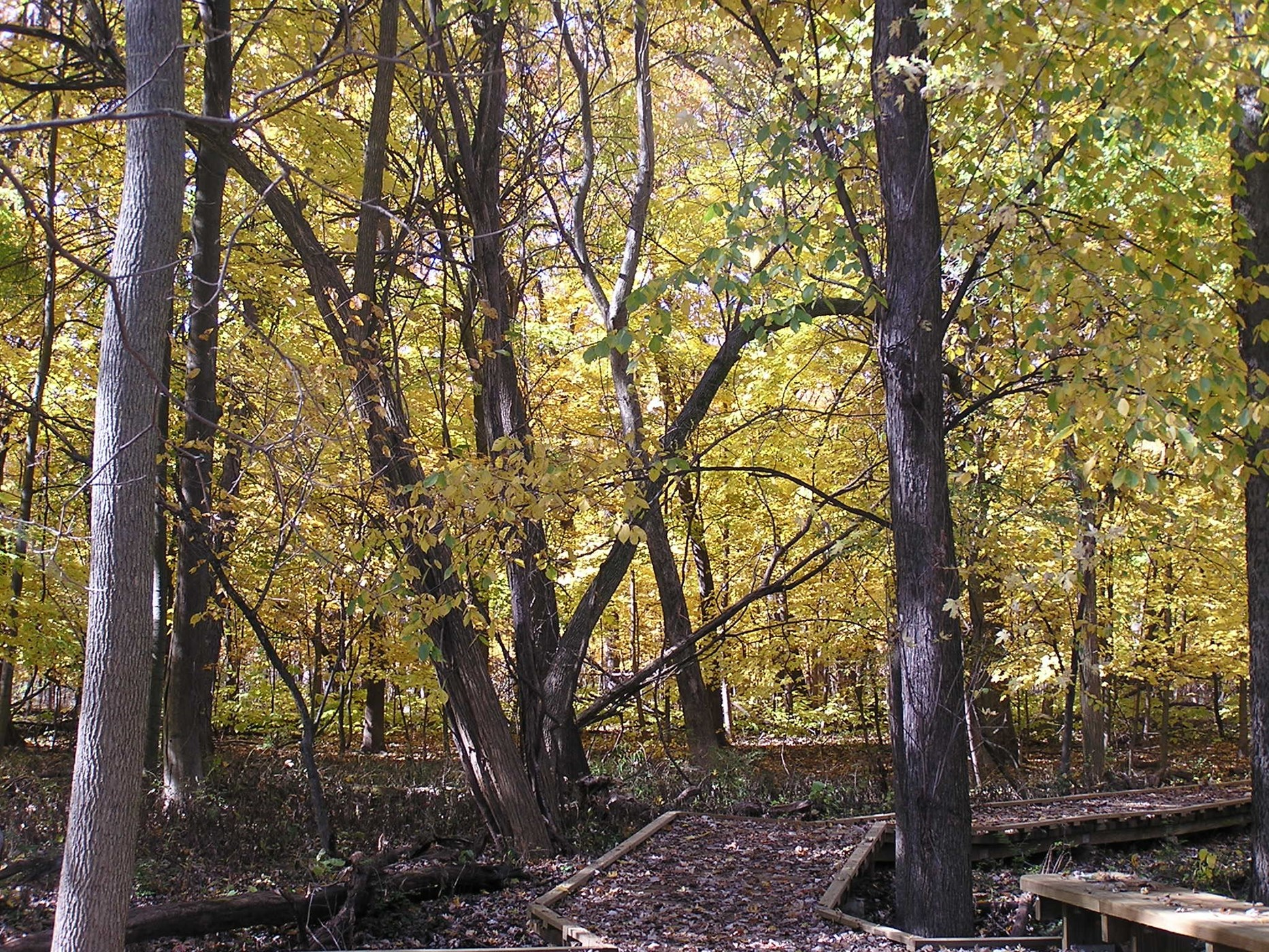 BuseyWoods_Fall_2020